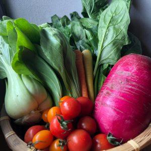 季節の旬野菜3、4種類〜